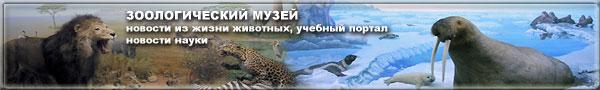 Новости о животных, учебный портал, новости науки на сайте зоологического музея