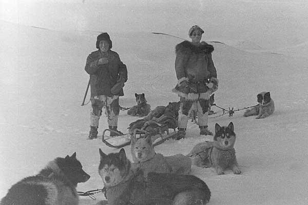 Каюр Эттувье с собаками