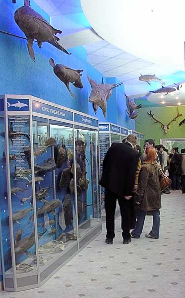 Экскурсия в зоологическом музее