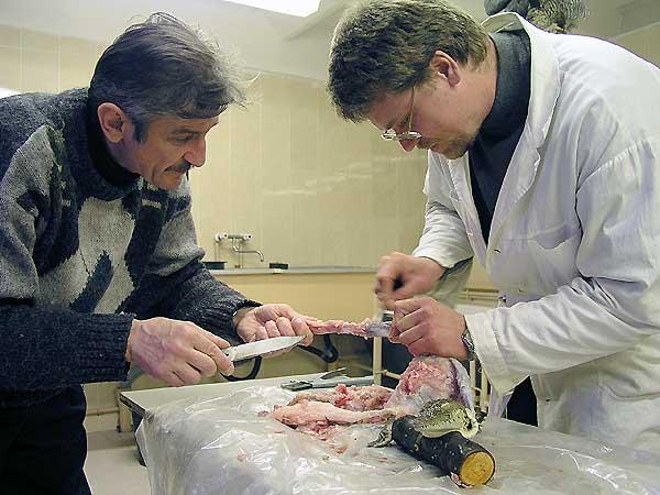 В. В. Соловьев и А. А. Стрюков трудятся над изготовлением чучела крокодила