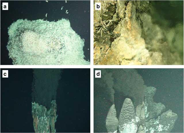 Фауна гидротермального источника