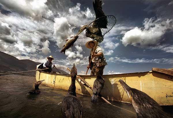 Баклан с уловом. Фото Yang Hai
