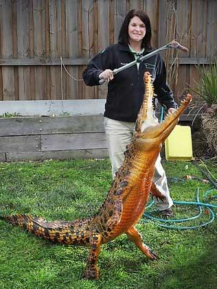 Оранжевый крокодил Снэппи