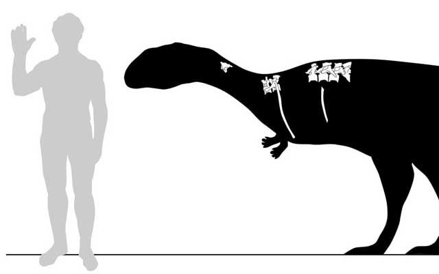 Сравнение роста Dahalokely tokana и человека. Иллюстрация Andrew Farke, Joseph Sertich