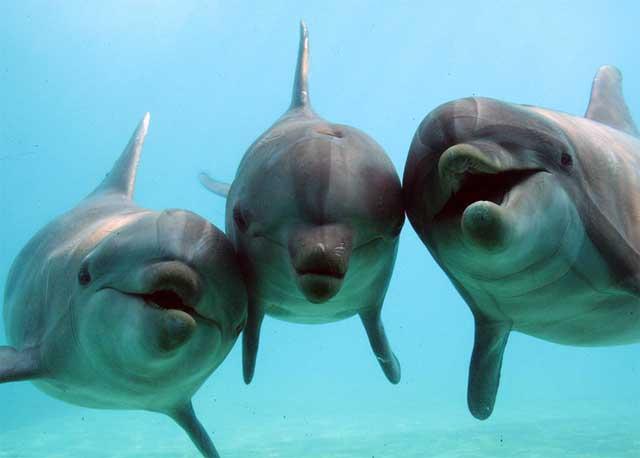 Дельфины. Фото предоставлено Dorothee Kremers