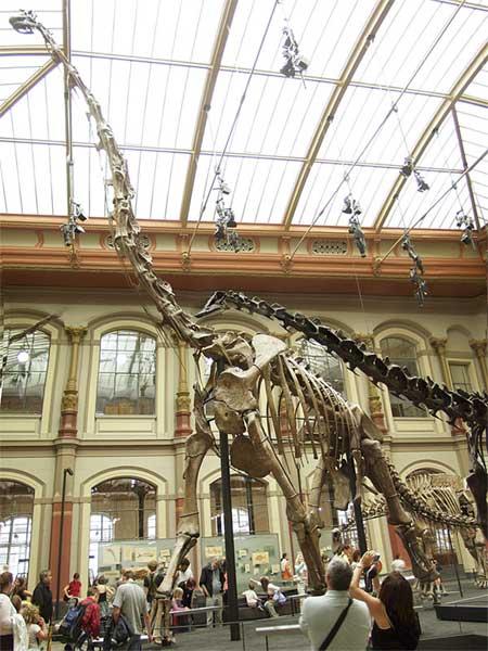 Скелет Brachiosaurus brancai в Музее естественной истории (Берлин) (фото – Axel. Mauruszat)