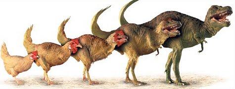 Цыпленкозавр - динозавр из цыпленка