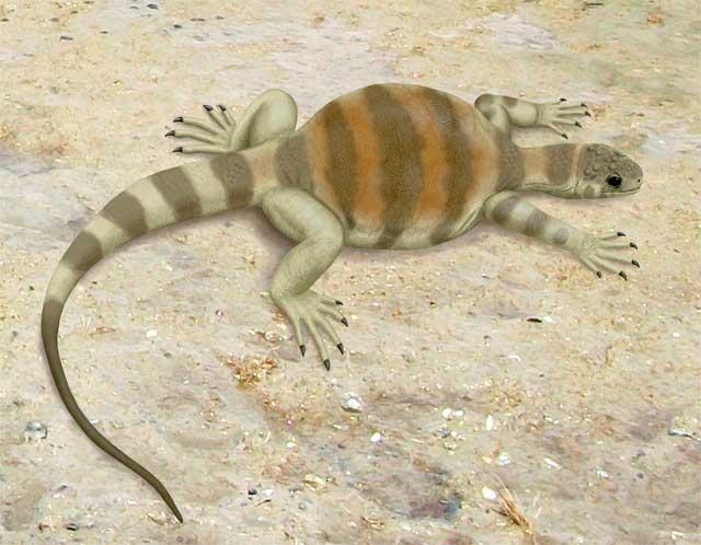 Eunotosaurus africanus. Реконструкция Smokeybjb