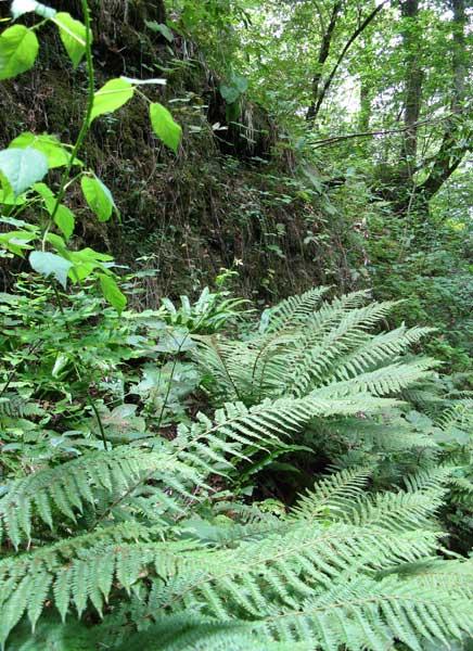 Стоит отойти от берега метров на 10 – и начинаются трудно проходимые «джунгли» с папоротниками, лианами ссапариля.