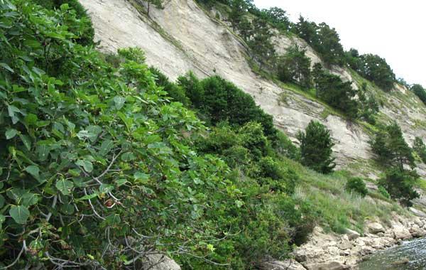 На берегу (на переднем плане снимка) растёт дикий инжир.