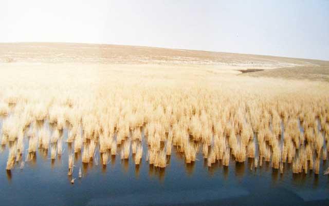 Озеро Донузлав - пресноводная часть