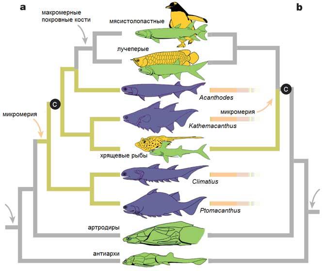 Эволюционное древо рыб в двух