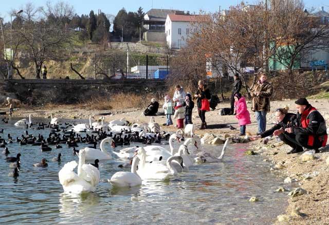 Птицы зимуют в Севастополе. Фото с сайта http://themeoftheday.ru