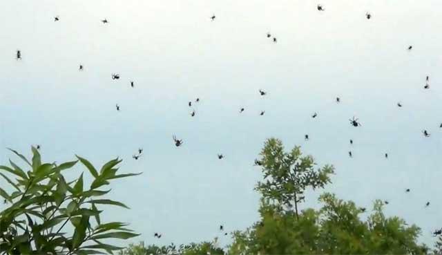 Дождь из пауков. Кадр из видео Erick Reis