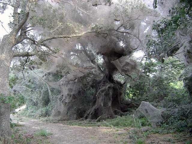 Гигантская паутина