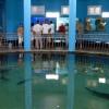 Севастопольский морской аквариум. Фото crimeamap.ru
